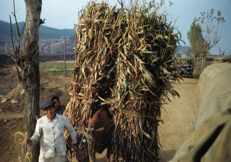 2 Farmer, 1950.jpg